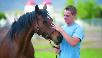 Equine Emphasis Degree in the College of Agriculture and Life Sciences, University of Arizona