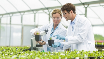 Plant Sciences Degree in the College of Agriculture and Life Sciences, University of Arizona