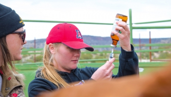 Veterinary Science Degree in the College of Agriculture and Life Sciences, University of Arizona
