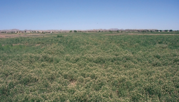 Ecology, Management & Restoration of Rangelands Emphasis Degree in the College of Agriculture and Life Sciences, University of Arizona