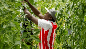 Agricultural Systems Management Emphasis Degree in the College of Agriculture and Life Sciences, University of Arizona