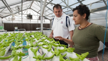 Sustainable Plant Systems: Agronomy Degree in the College of Agriculture and Life Sciences, University of Arizona