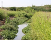 Just add water: Biodiversity resurgence in effluent-fed desert riverbeds