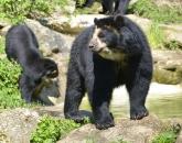 New Undergraduate Certificate in Zoo and Aquarium Conservation