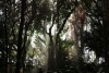 The rainforest at Biosphere 2 kissed by rain after 2 month controlled drought experiment